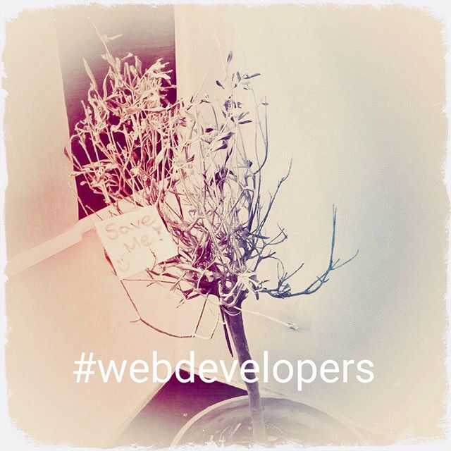Look what came in today. Challenge excepted! #greenthumb #webdeveloper #attheoffice #flowerpower #nerdlife #help #ineedlove @sedadigital @elbtalent @freshpepper_events
